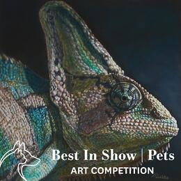 Best In Show | Pets